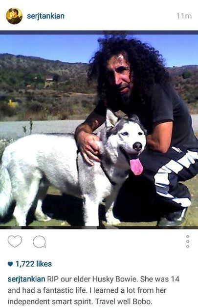 Serj diz adeus à sua cadela Bowie